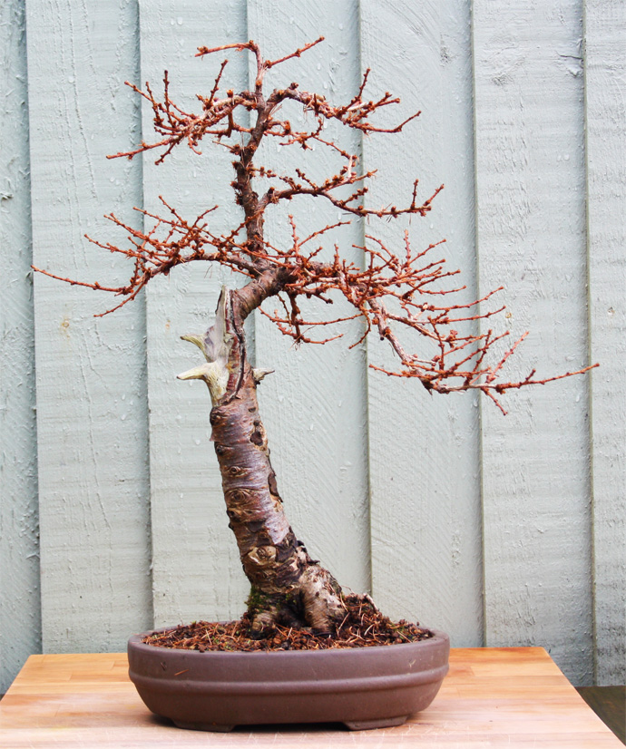 Another Larch Rewired